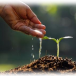 seed grant
